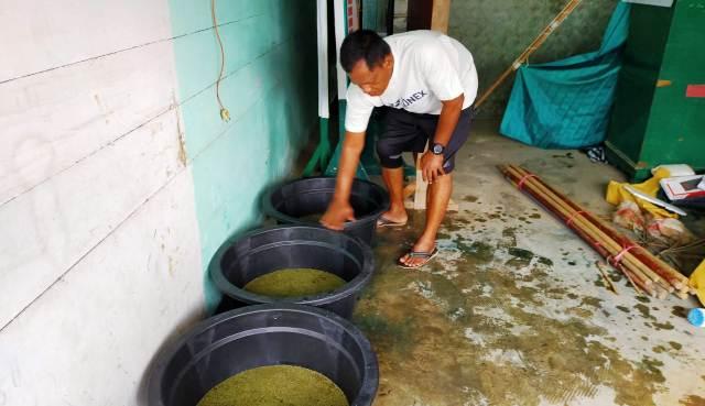 Permalink ke Terus Berinovasi, Danrem 032/Wbr Kembangkan Azolla Untuk Pupuk dan Pakan Ikan