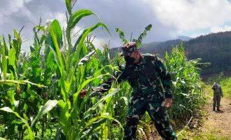 Permalink ke Pakai Bios44, Tanaman di Lahan Eks Tambang Pasir Desa Naluk Sumedang Tumbuh Subur
