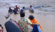 Permalink ke Warga Berusaha Selamatkan Paus yang Terdampar di Sungai Kong OKI