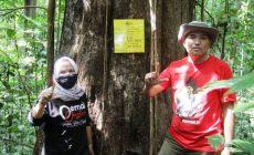 Permalink ke HUT ke-48 PDI Perjuangan, DPC Muba Tanam 21.000 Bibit Pohon